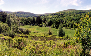 View of Catskills Meadow and Mountains