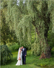 Wedding couple kissing under a Willow tree